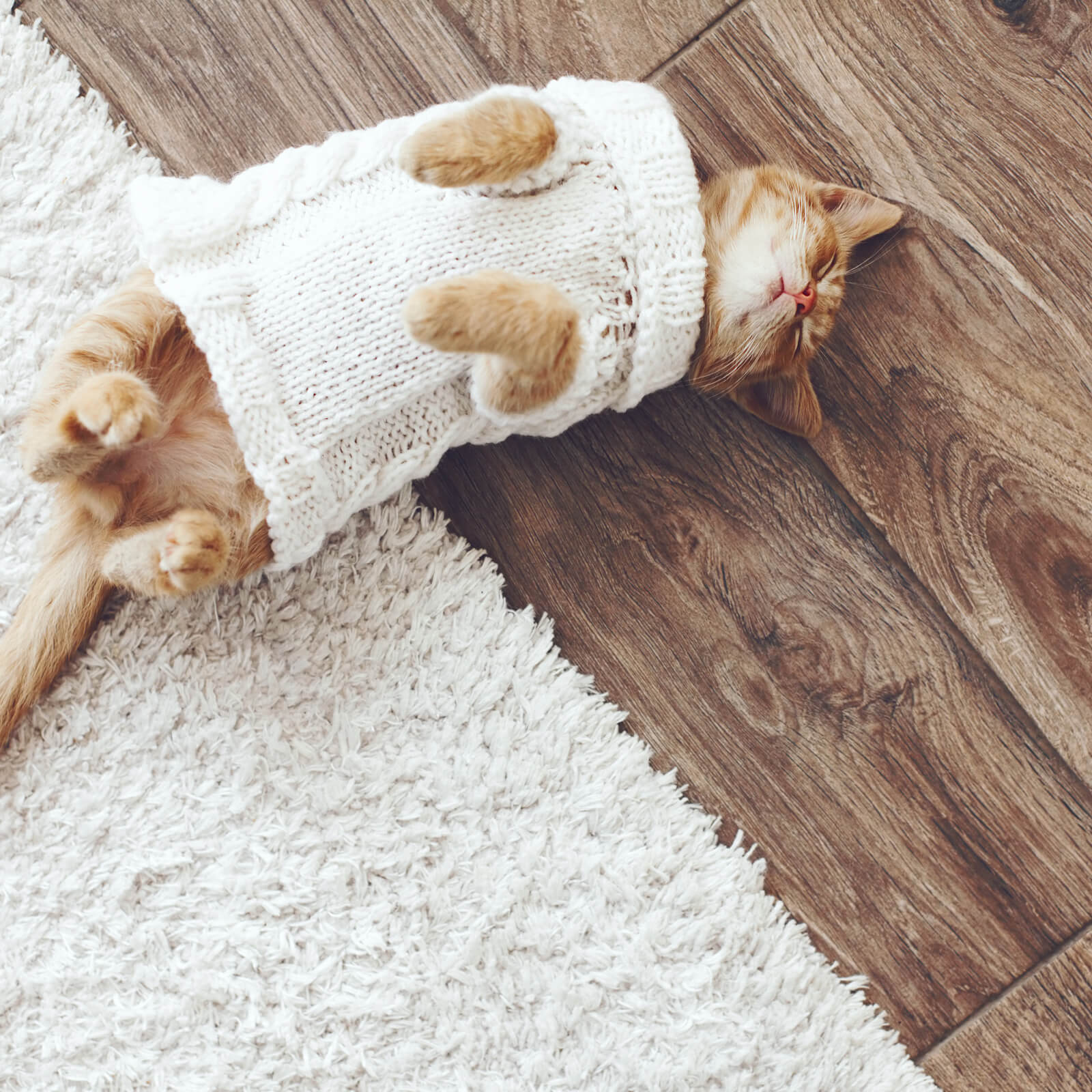 Cat on Hardwood floor | Vic's Carpet & Flooring