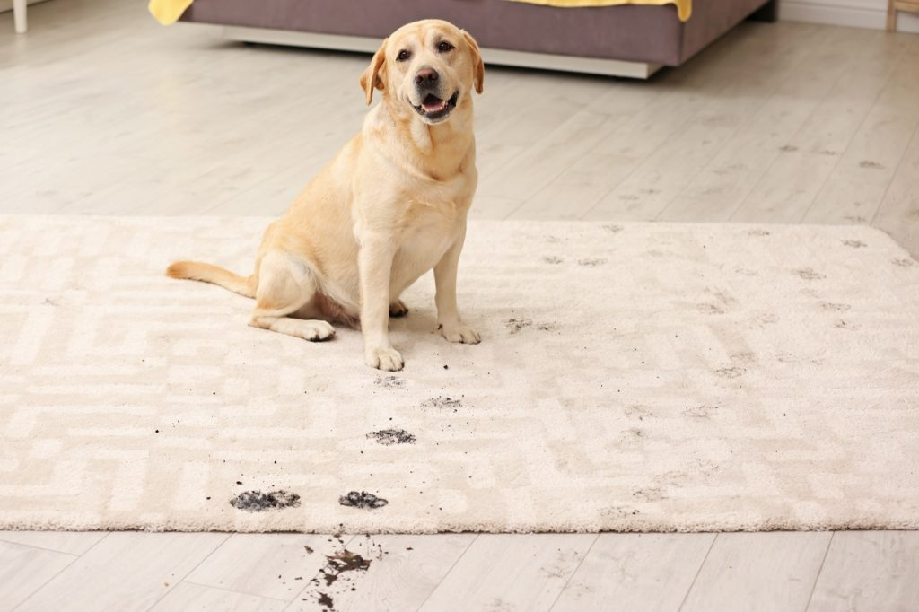 Rug care tips | Vic's Carpet & Flooring