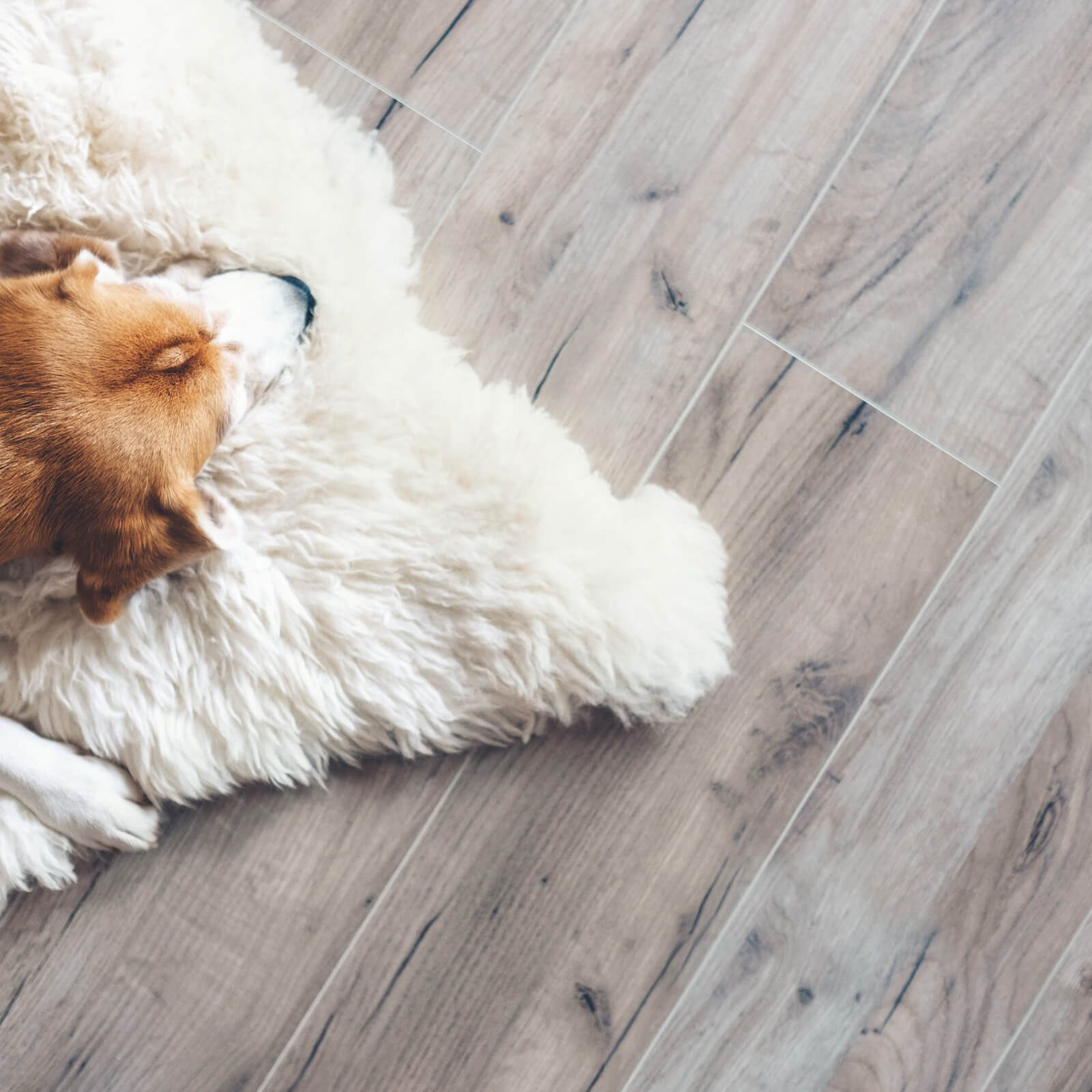 Dog on Vinyl floor | Vic's Carpet & Flooring